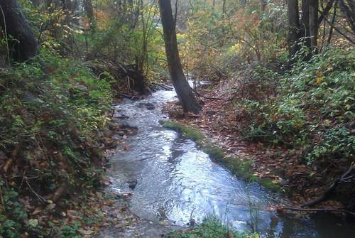 Photo of riparian buffer at stream