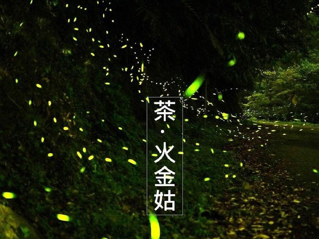黑夜登場,螢火蟲出現在茶園邊。