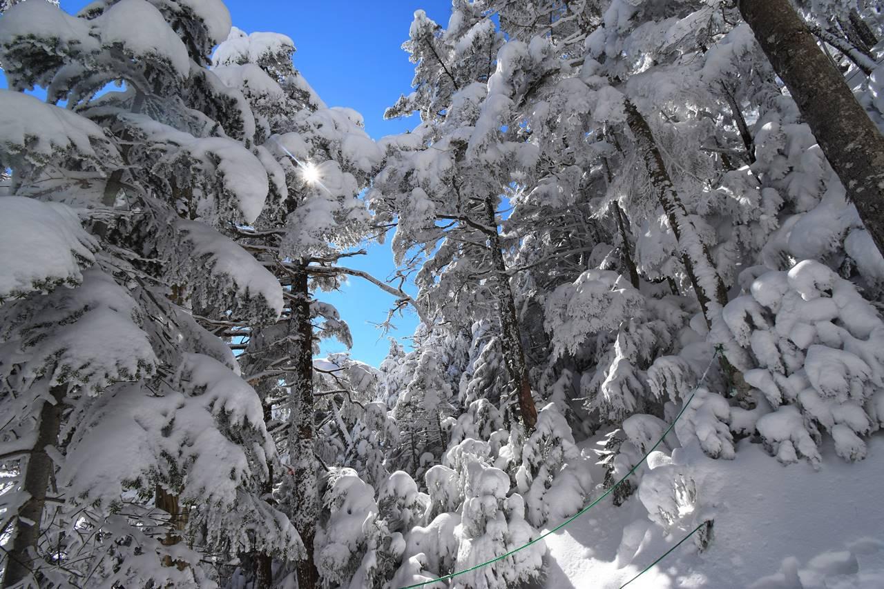 冬の北八ヶ岳の森