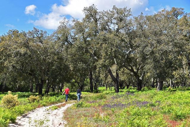 Walking through forest, Sesimbra to Azeitao, Arrabida