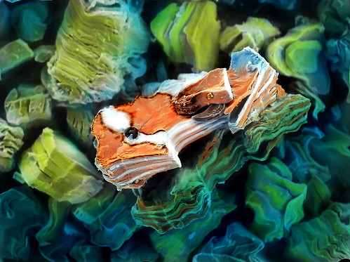 """""""Nano Nemo on the Water"""" resembles the young clown fish from the Disney/Pixar movie """"Finding Nemo."""""""