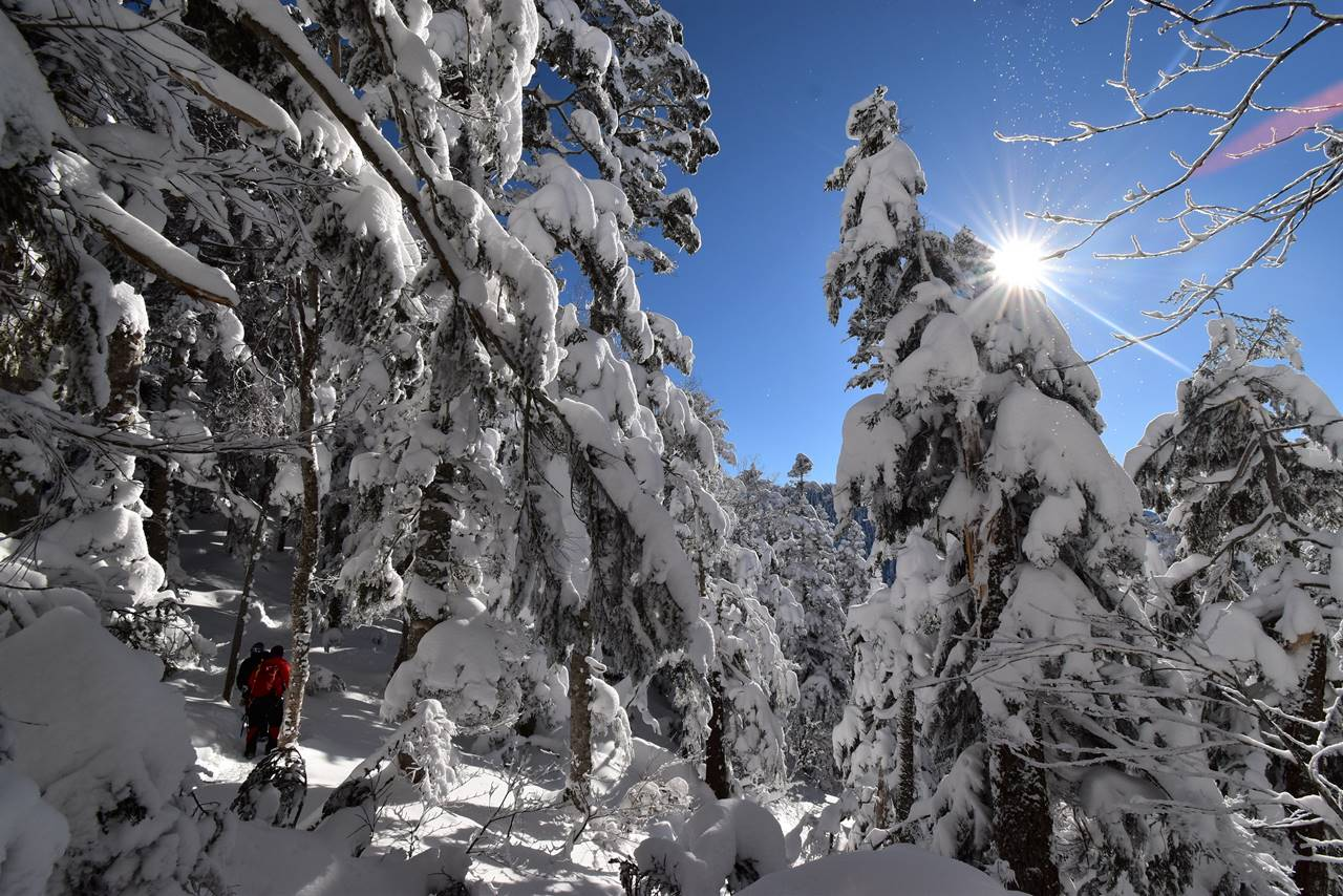 西穂高岳 樹氷の登山道