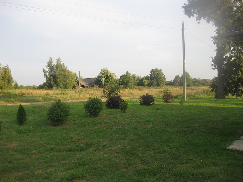 Кусты около дома