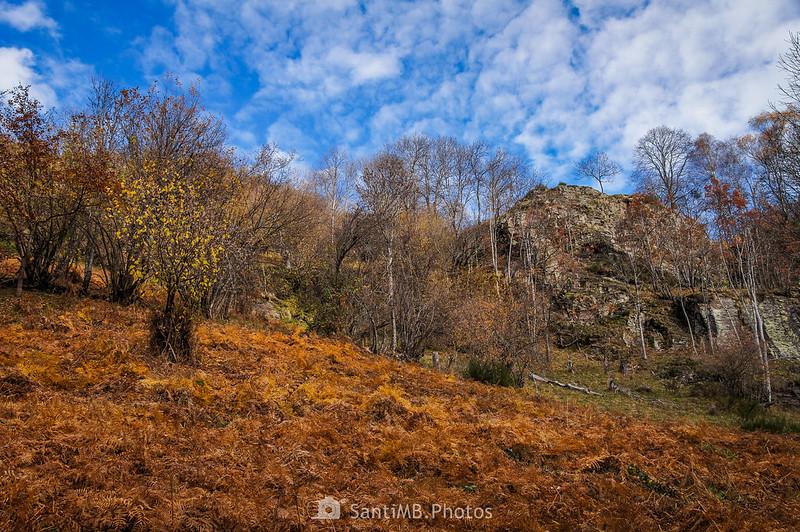Pradera de helechos en la Val de Toran