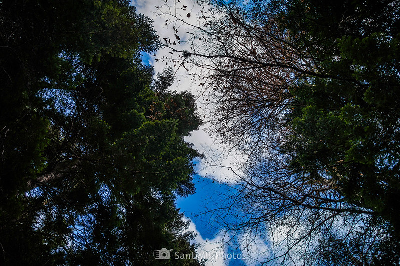 Plano nadir del bosque de la Artiga de Lin