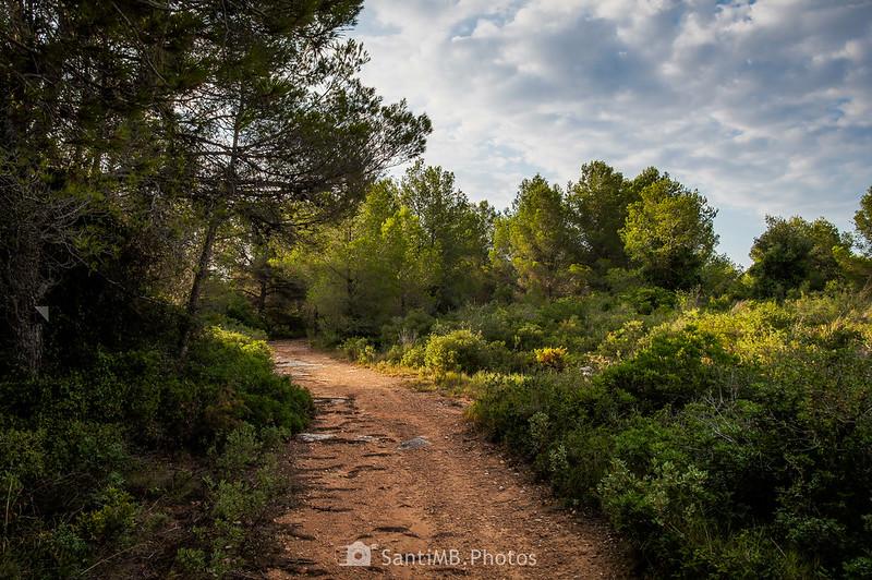 Camino del Bosc de Les Comes
