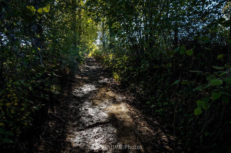 Camino del Pla d'Armadans