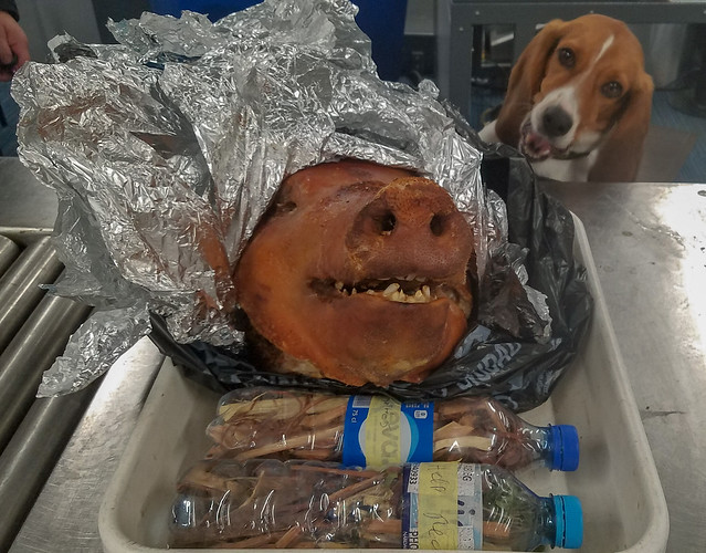 Cooked pig head with Hardy