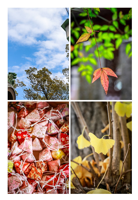 深川神社(愛知県瀬戸市)の木々の紅葉