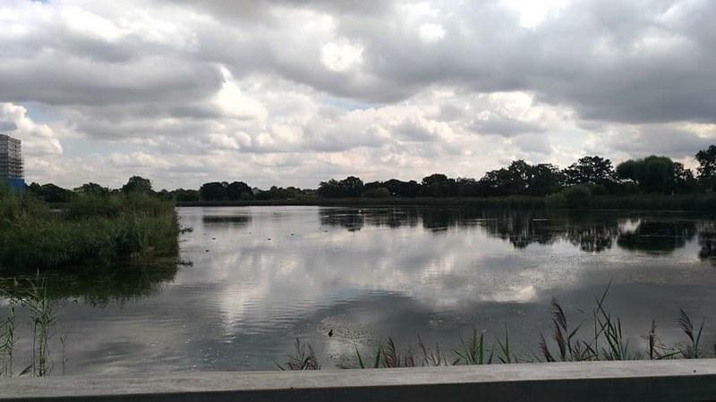 WoodBerry 濕地現景
