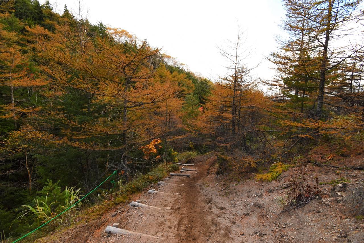 黒斑山登山 中コースの紅葉