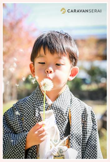 七五三 5歳の男の子 タンポポの種を吹いて飛ばす