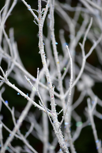 crystallized branches-5 | by Oregon Coastal Flowers
