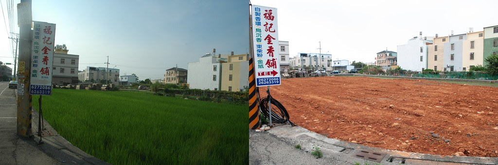 台灣水蕹 棲地破壞