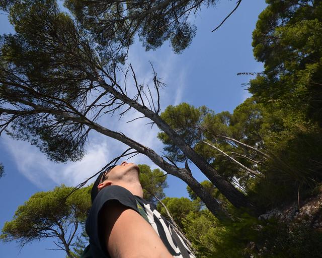 Pinares de Menorca en uno de sus senderos