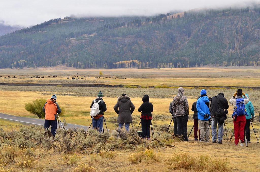 黃石的Larma Valley,灰狼總是會在清晨出現在對面的草原上,而這些追狼人們在天未亮時就已經在視野廣闊的山坡上架設好望遠鏡,全身包緊緊的在寒氣中等待著。