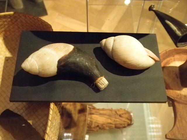 Megalobulimus
