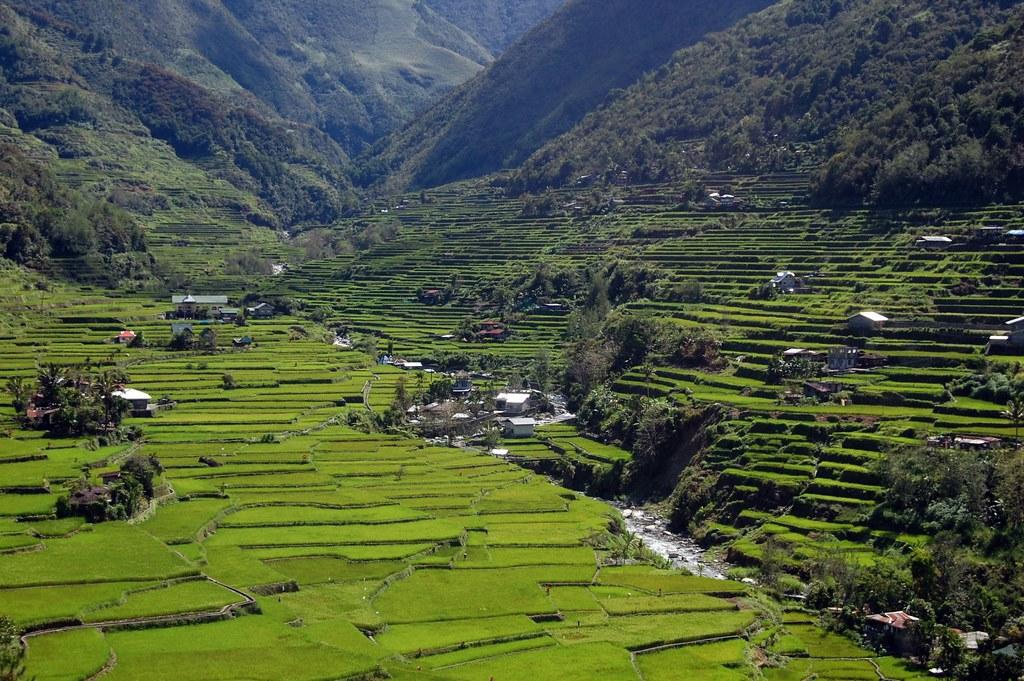 菲律賓伊富高省水梯田。圖片來源:Shubert Ciencia (CC BY-NC 2.0)
