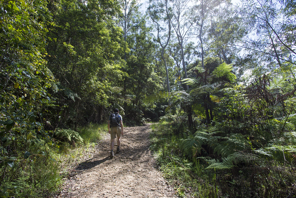 Blue gum walk management trail
