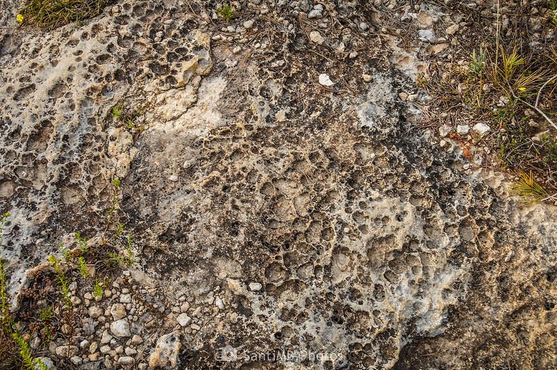 Curiosa textura de una roca caliza en Les Comes