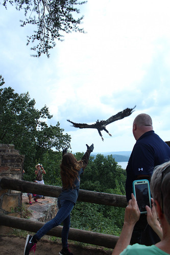 A bald eagle is released into the wild
