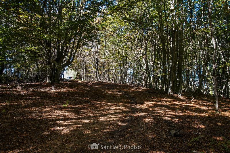 Bosque de las Roques Encantades