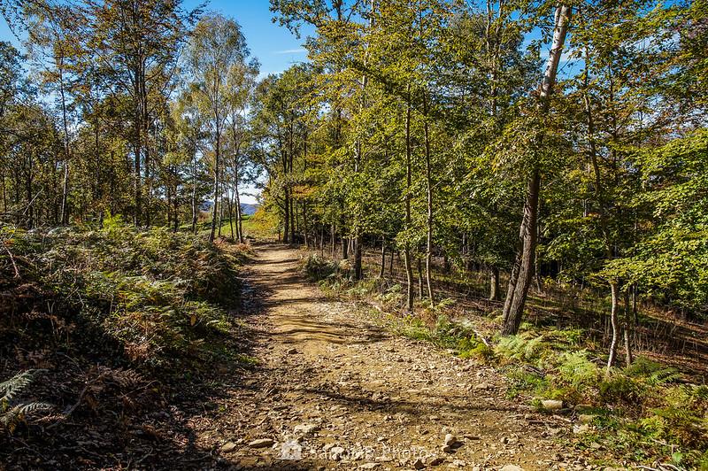 Camino ganadero del Coll de Condreu al Collet de l'Arç