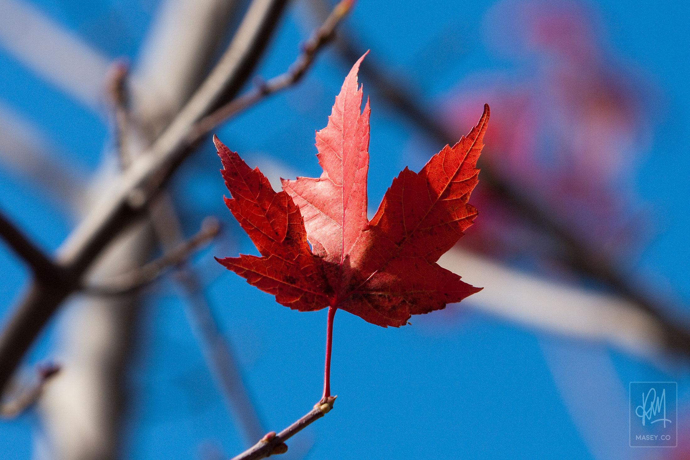 Vancouver fall colour photo walk