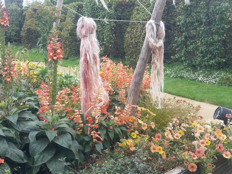 9/13/18 121541 dye plants