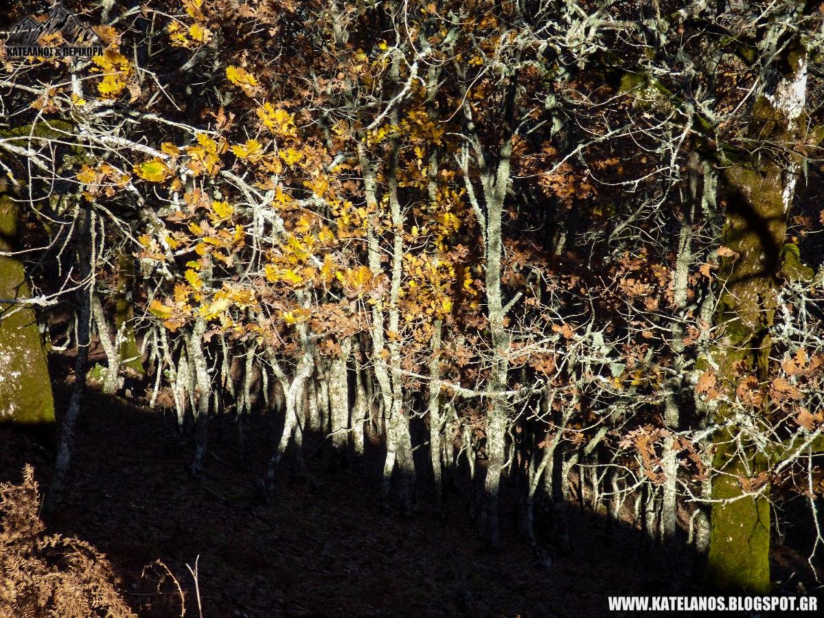 δάσος βελανιδιάς αράκυνθος
