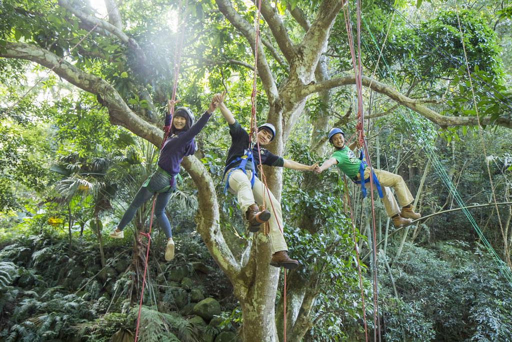 志工攀上約206歲芒果樹合照