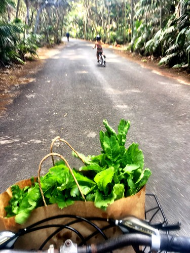 Lord Howe Island : Riding back from Thornleigh Farm. Basil, parsley and roquette! | by miaow