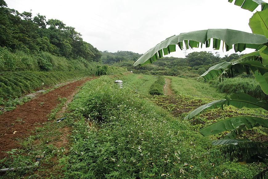 沿著小溪開墾的梯田有著豐沛且純淨的灌溉水源,田區一年四季栽種著山藥、冬瓜、豆薯、絲瓜、南瓜等等作物。