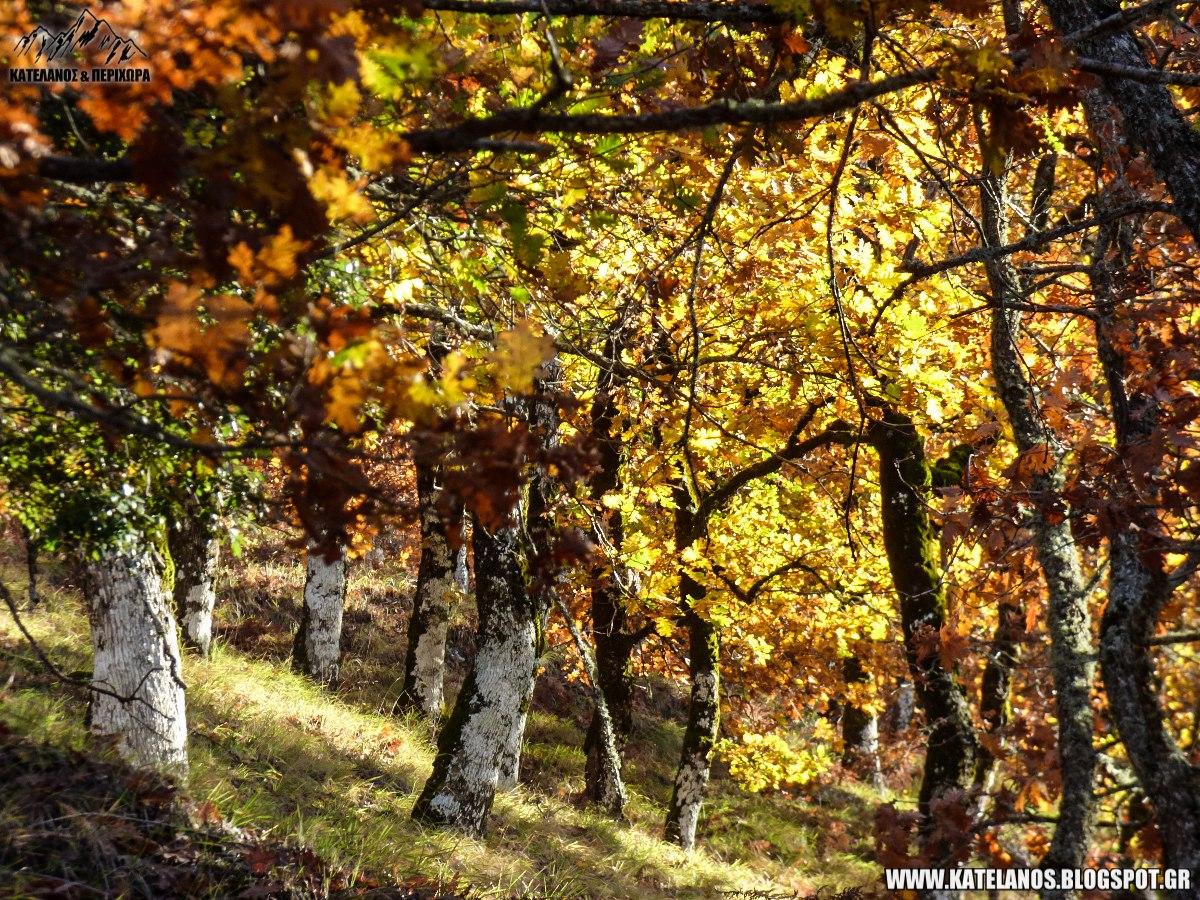 όρος αράκυνθος φθινόπωρο δάσος