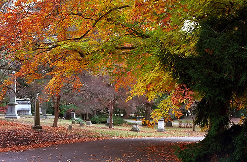 "Cincinnati - Spring Grove Cemetery & Arboretum ""Another Autumn Road"" 