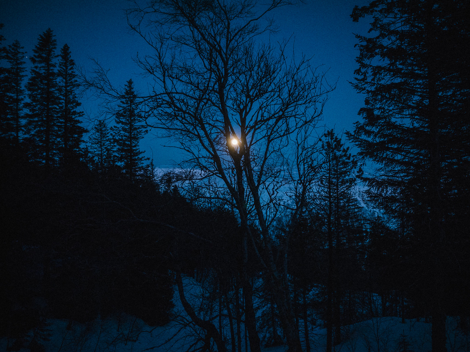 Moon at dusk behind leaveless tree. Winter.
