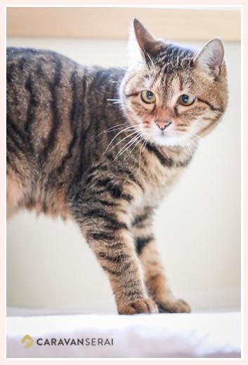 ネコ 9歳のメス