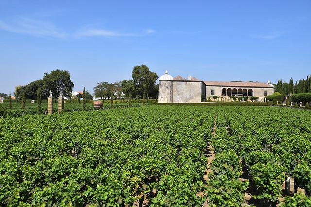 Vineyard, Bacalhoa, Azeitao, Setubal, Portugal