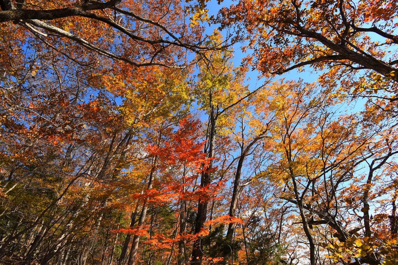牛ノ寝通り 紅葉に包まれる登山道