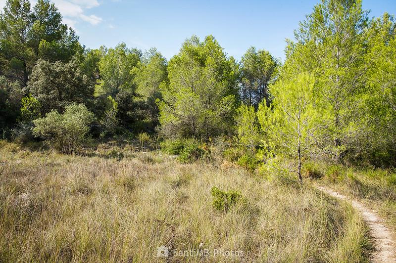 Entrando en el Bosc de Les Comes, en Bellvei