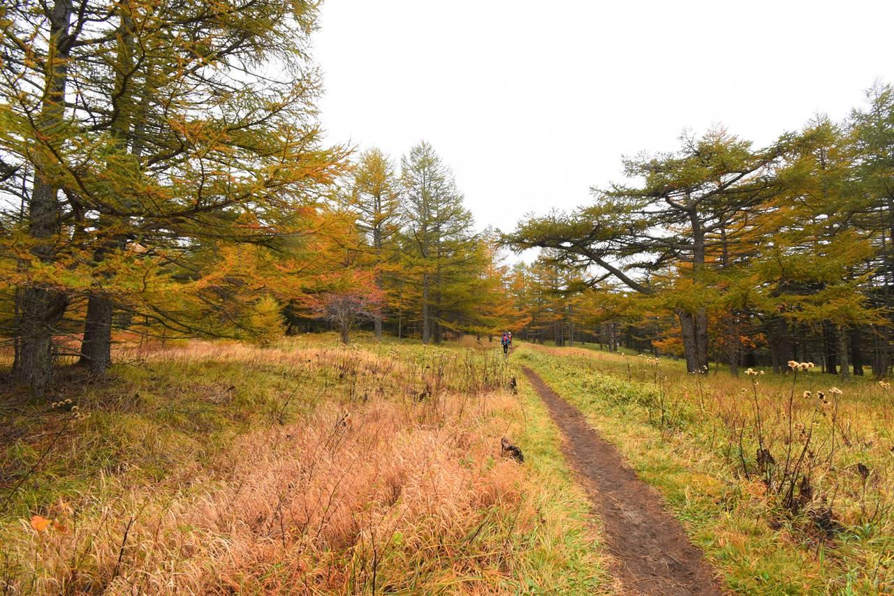 浅間山登山 湯ノ平口の紅葉