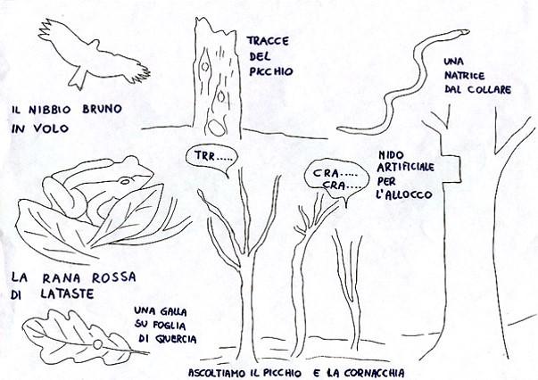 tavola degli animali
