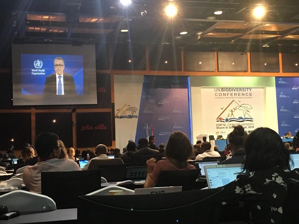 世界衛生組織幹事長Tedros Adhanom透過影片強調生物多樣性與全球衛生的連結。攝影:陳偉迪