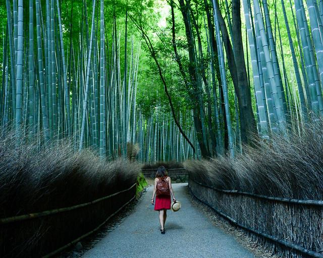 Bosques de bambú de Arashiyama