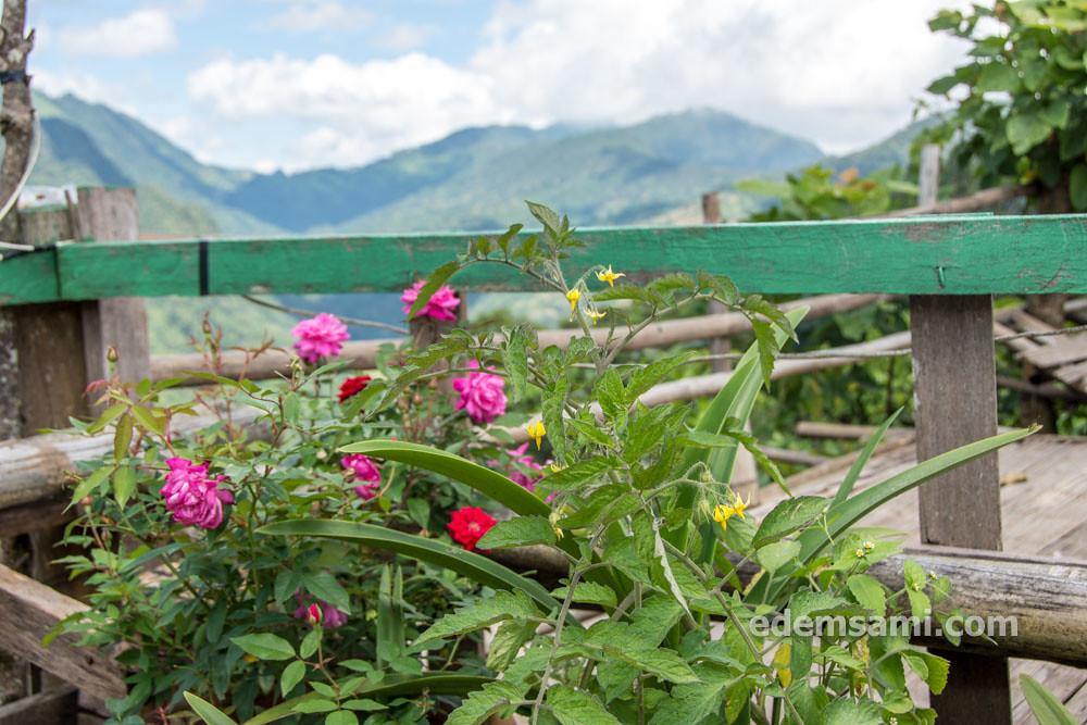 Таиланд Чиангмай Дой Ангкханг королевский проект