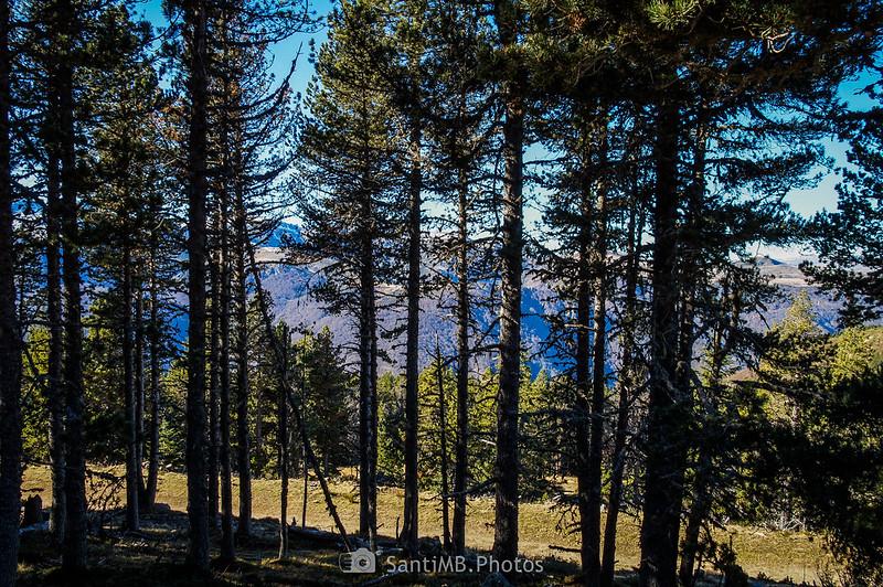 Pistas de Plateau de Beille a través de los árboles