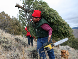 A man hefts a chainsaw-cut Christmas tree over his shoulder as his dog follows behind with sticks in its mouth