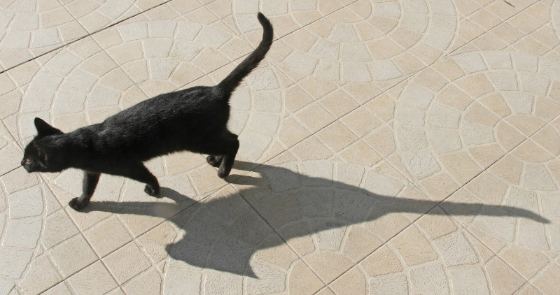 Fotografia em Palavras: Sombras de gatos