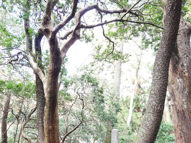 「根本中堂 薬師如来 御衣木旧跡」 の石標 (比叡山延暦寺 東塔北谷)