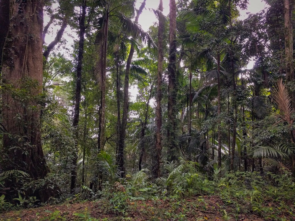 Typical dense rainforest habitat. Photo by Louis Backstrom, Lawton Rd, 8 Apr 2018